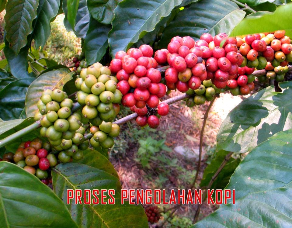 panduan proses pengolahan biji kopi 960x750 » Ini Dia Panduan Proses Pengolahan kopi yang Berkualitas