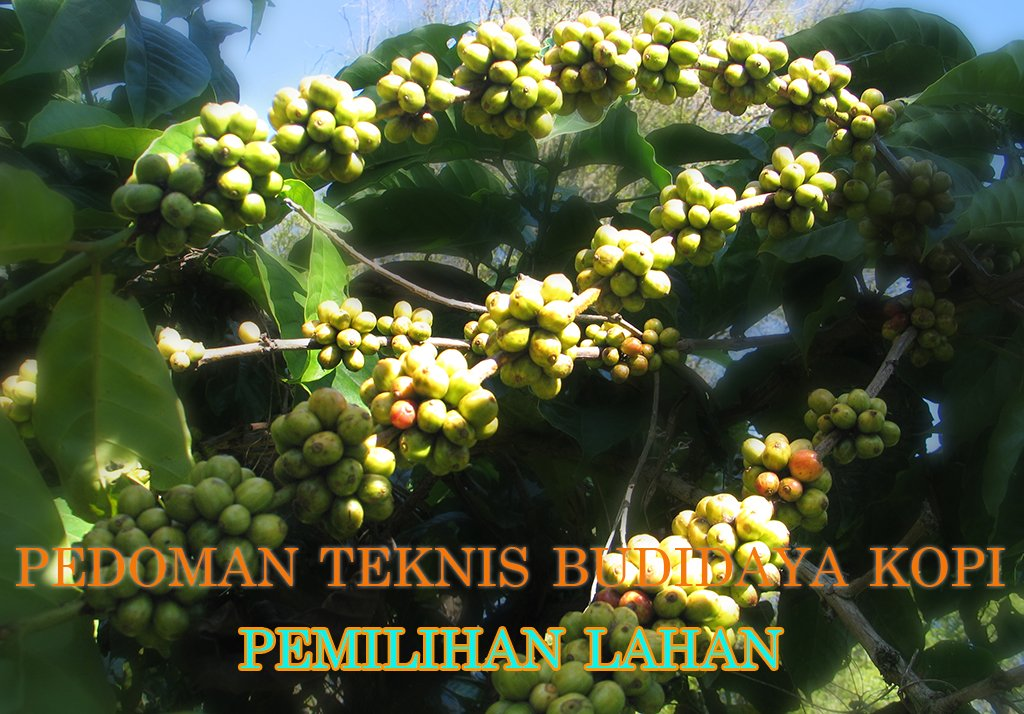 pedoman teknis budidaya kopi pemilihan lahan » Pedoman Teknis Budidaya Kopi Mudah Praktis Bagian 1 - Pemilihan Lahan Tanaman Kopi