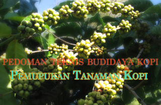 pedoman teknis budidaya kopi pemupukan tanaman kopi 320x210 » Pedoman Teknis Budidaya Kopi Mudah Praktis Bagian 8 - Pemupukan Tanaman Kopi