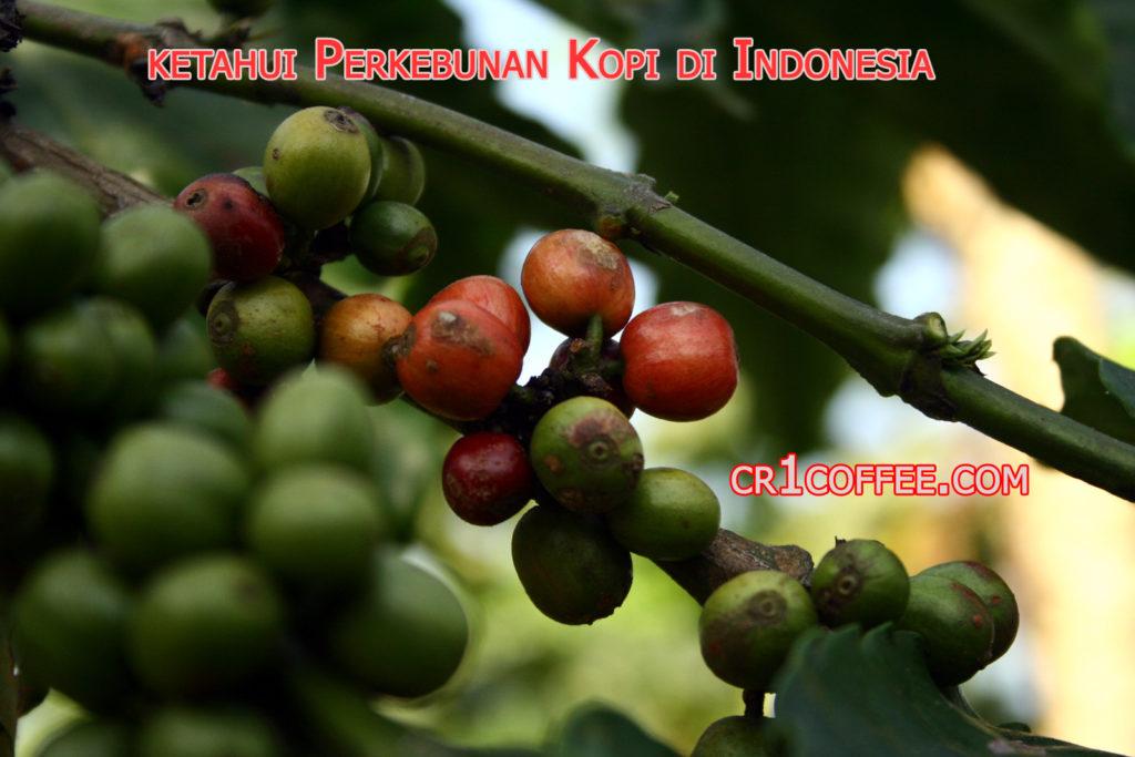perkebunan kopi di indonesia 1024x683 » Sekilas Info tentang Perkebunan Kopi Terbesar di Indonesia