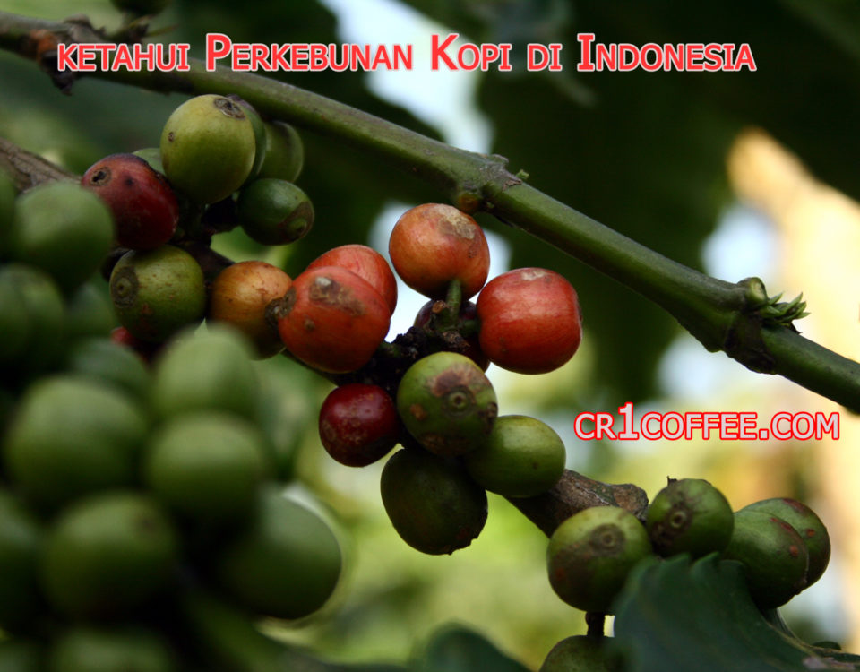 perkebunan kopi di indonesia 960x750 » Sekilas Info tentang Perkebunan Kopi Terbesar di Indonesia