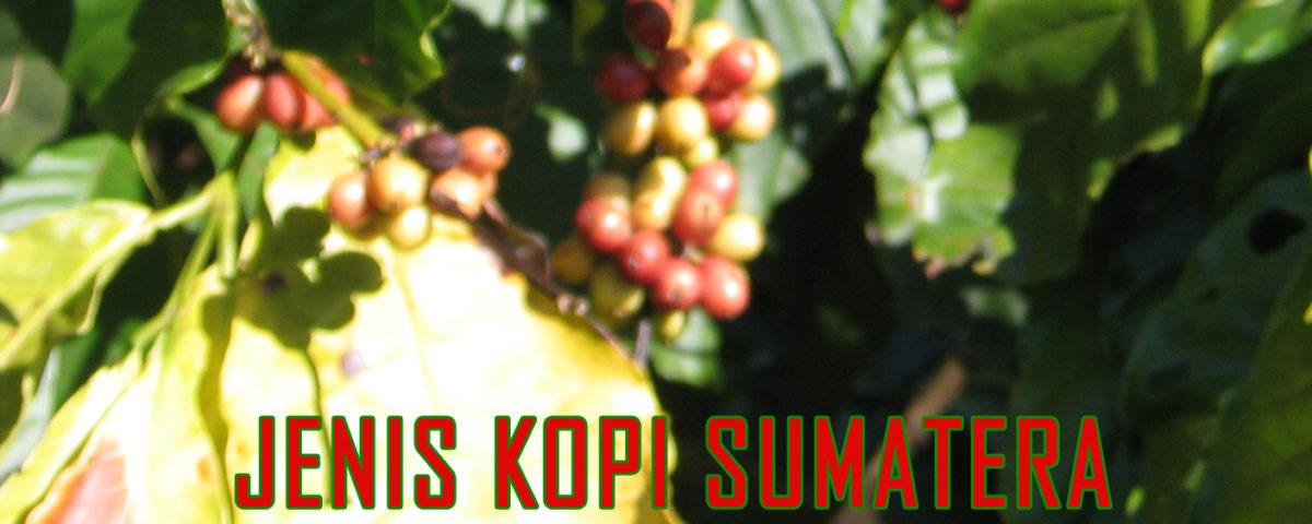 ragam varietas kopi sumatera 1200x480 » Kopi Sumatera Beraroma Rempah Pegunungan Nan Sejuk