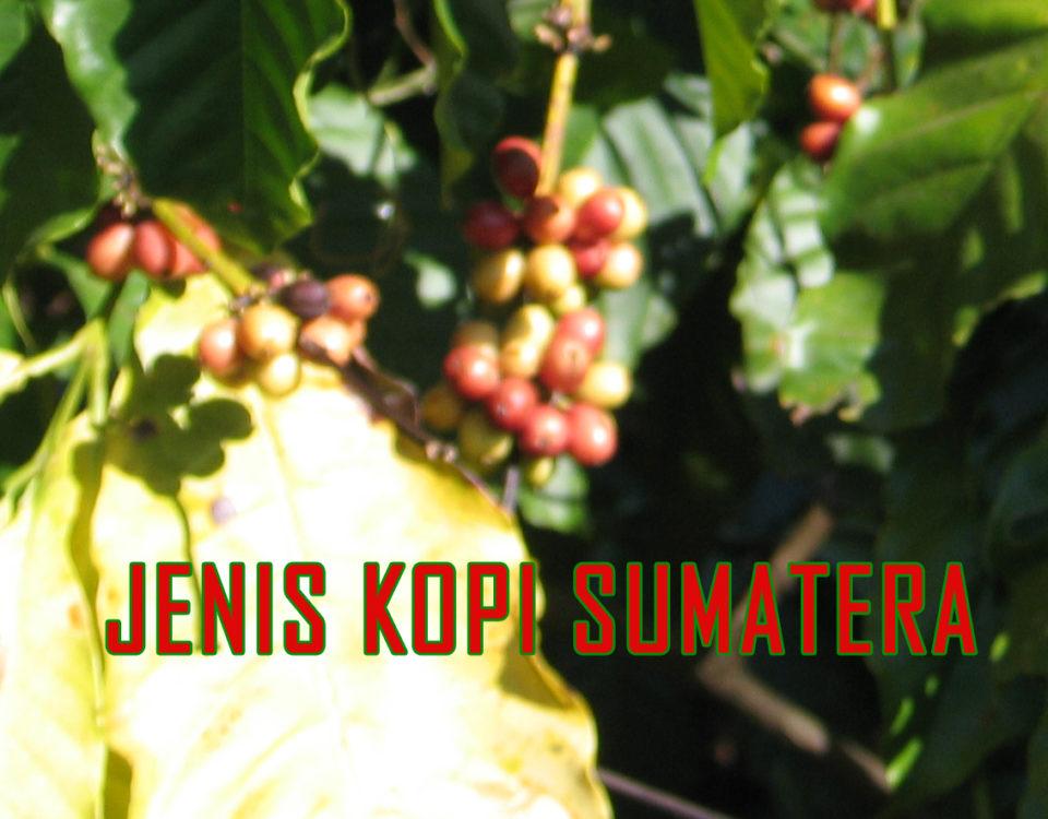 ragam varietas kopi sumatera 960x750 » Kopi Sumatera Beraroma Rempah Pegunungan Nan Sejuk