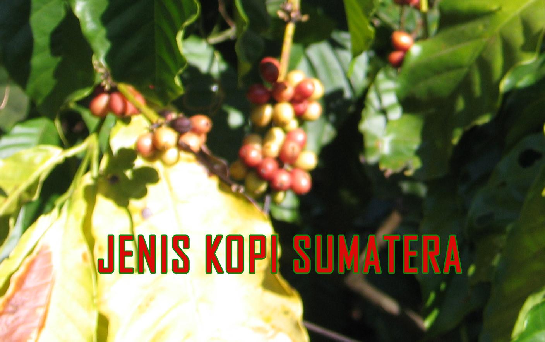 ragam varietas kopi sumatera » Kopi Sumatera Beraroma Rempah Pegunungan Nan Sejuk